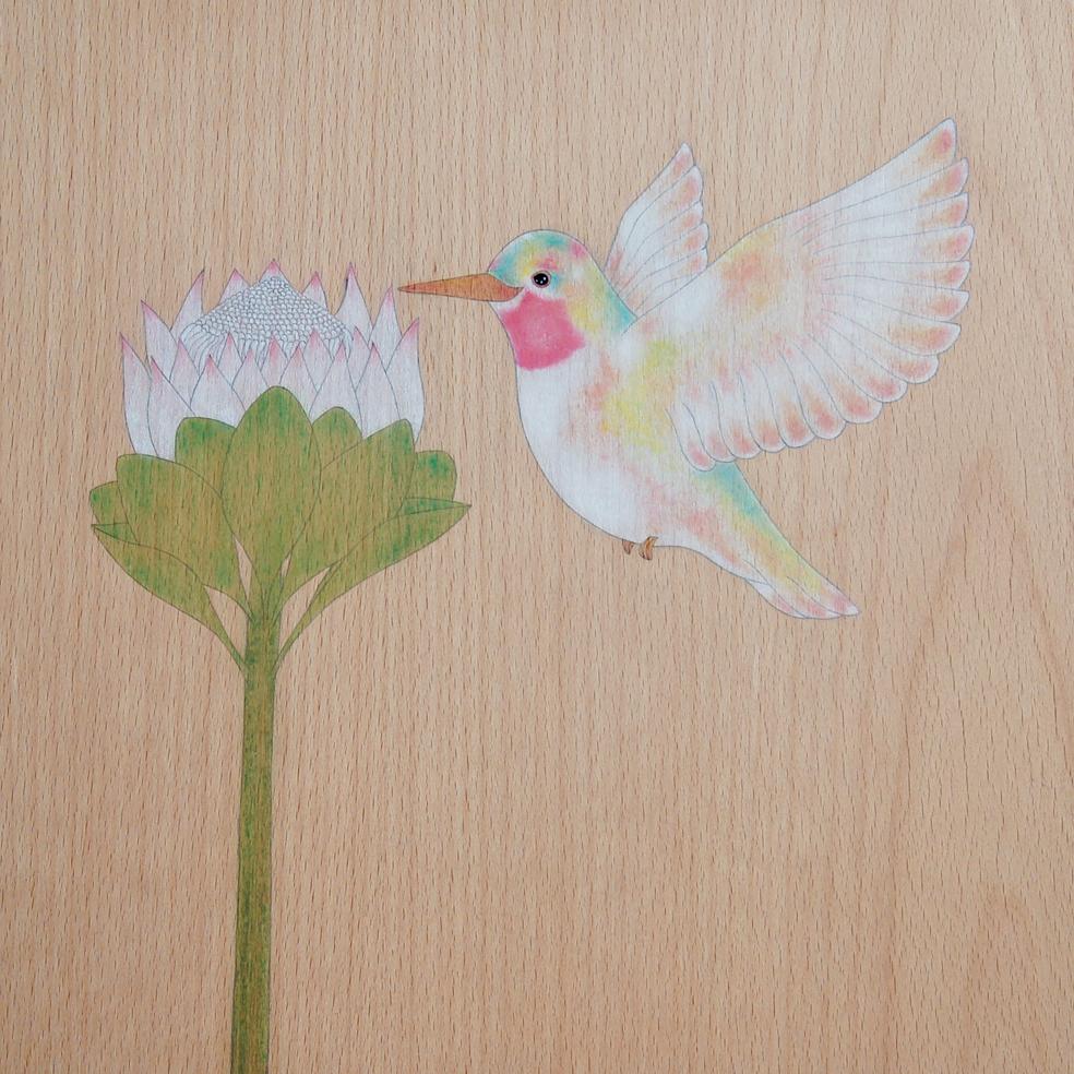 """""""colibri"""""""